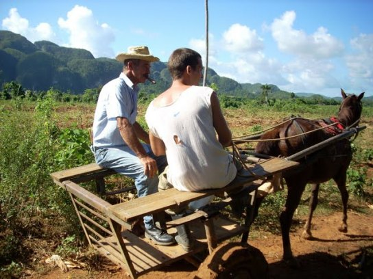 cuban tobacco farmers