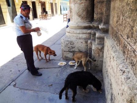 dogs havana cuba